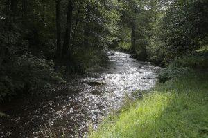 Das Oberflächenwasser in Deutschland hat nicht überall die gleiche Qualität. Trotzdem müssen Sie in Deutschland kein Wasser sparen.